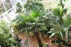 Тропические растения на балконе