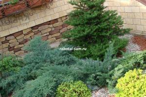 Вариант высадки горизонтального можжевельника в ландшафтном дизайне загородного дома или дачи