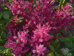 Насаждение тенелюбивых растений в не солнечные уголки сада