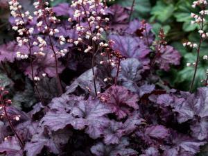 Насаждение теневыносливых растений в не солнечные уголки сада