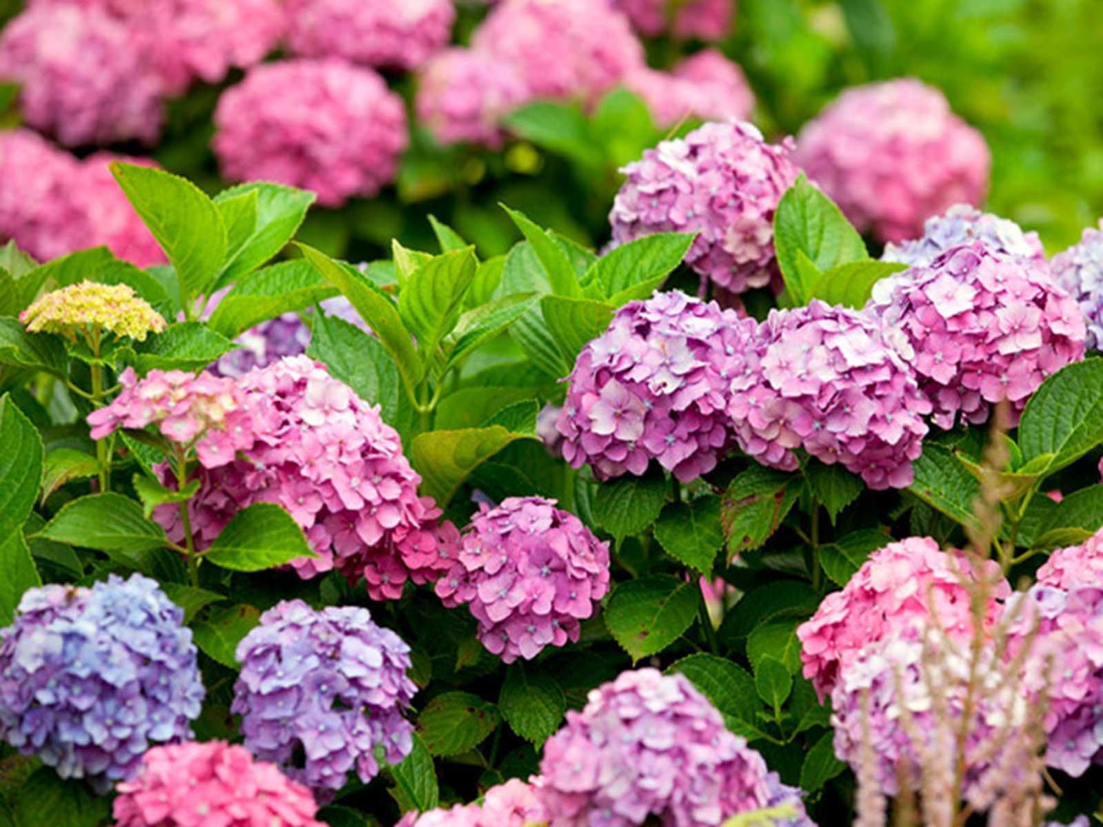 Декорирование тенистых уголков сада многолетними растениями