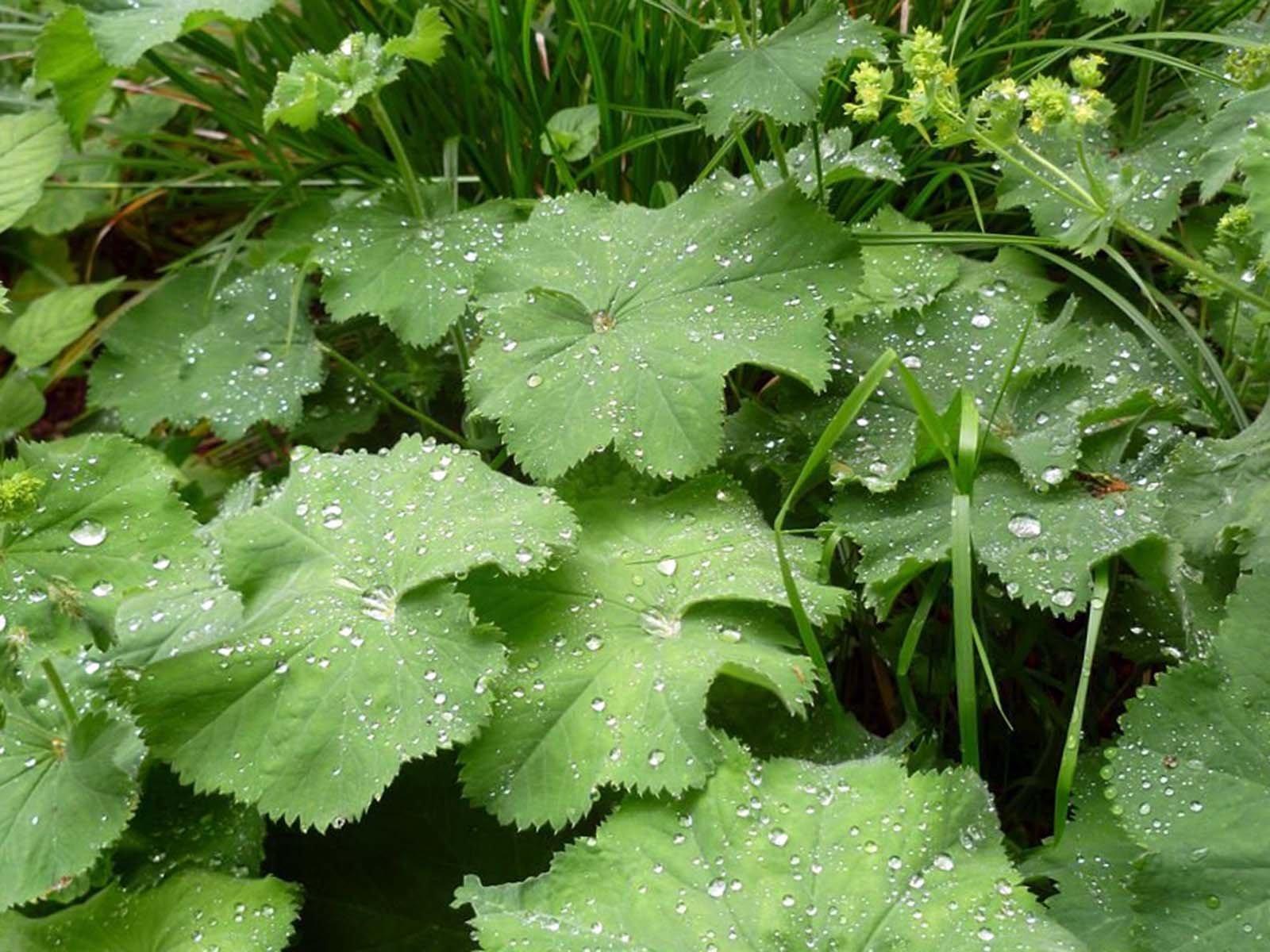 Посадка теневыносливых растений в не солнечные уголки сада