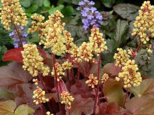 Посадка теневыносливых растений в тенистые закоулки сада