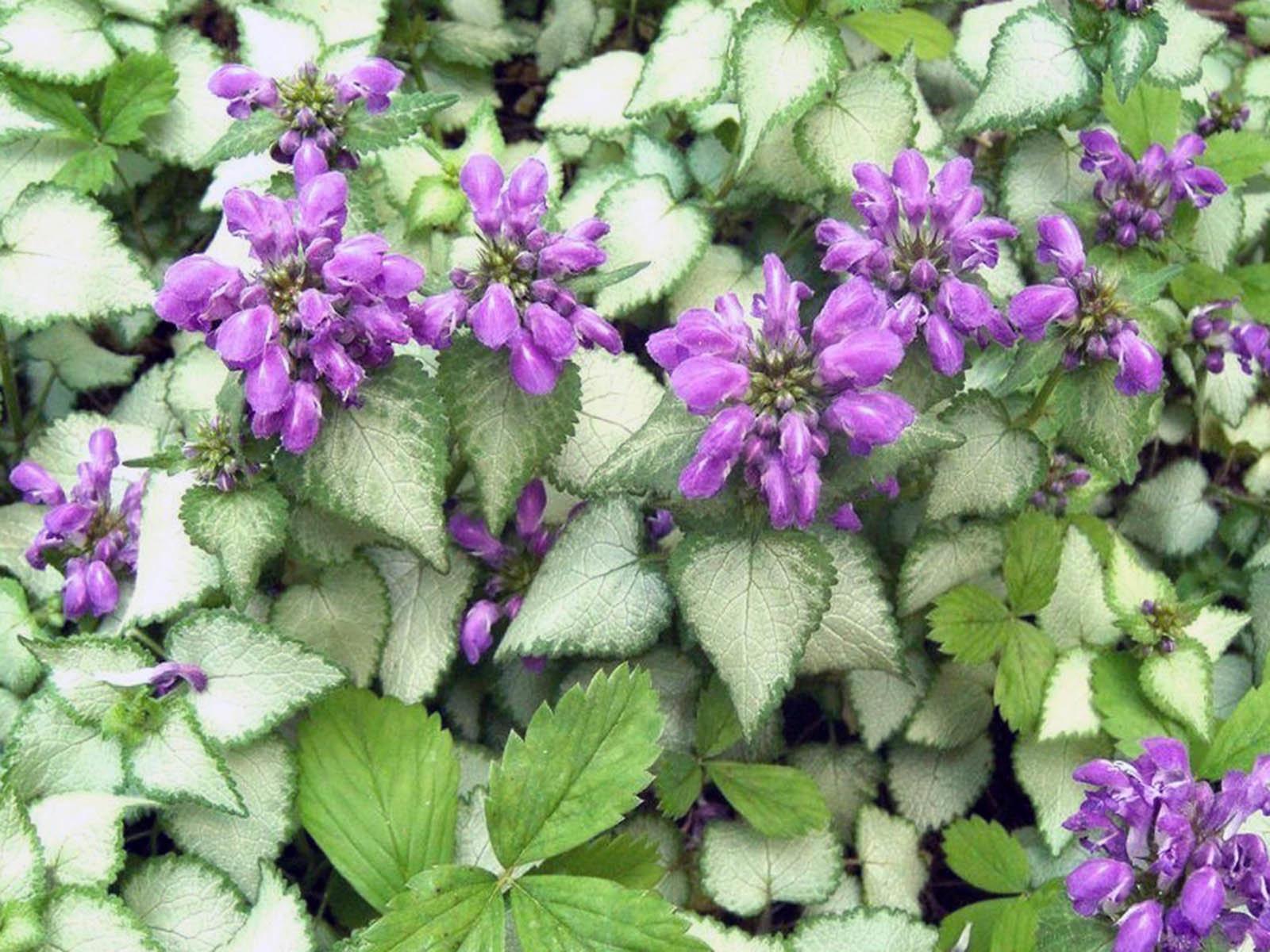 Садим теневыносливые растения в тенистые уголки сада