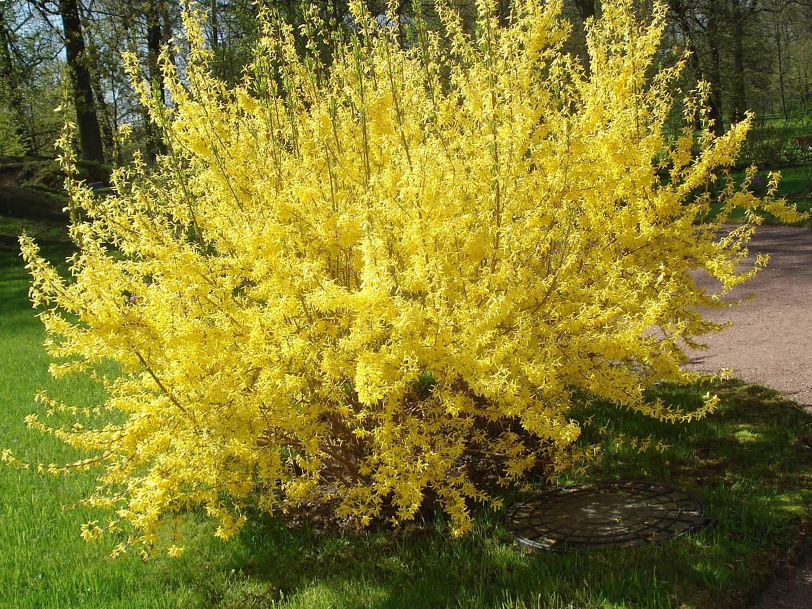Красивые и оригинальные цветущие кусты для сада
