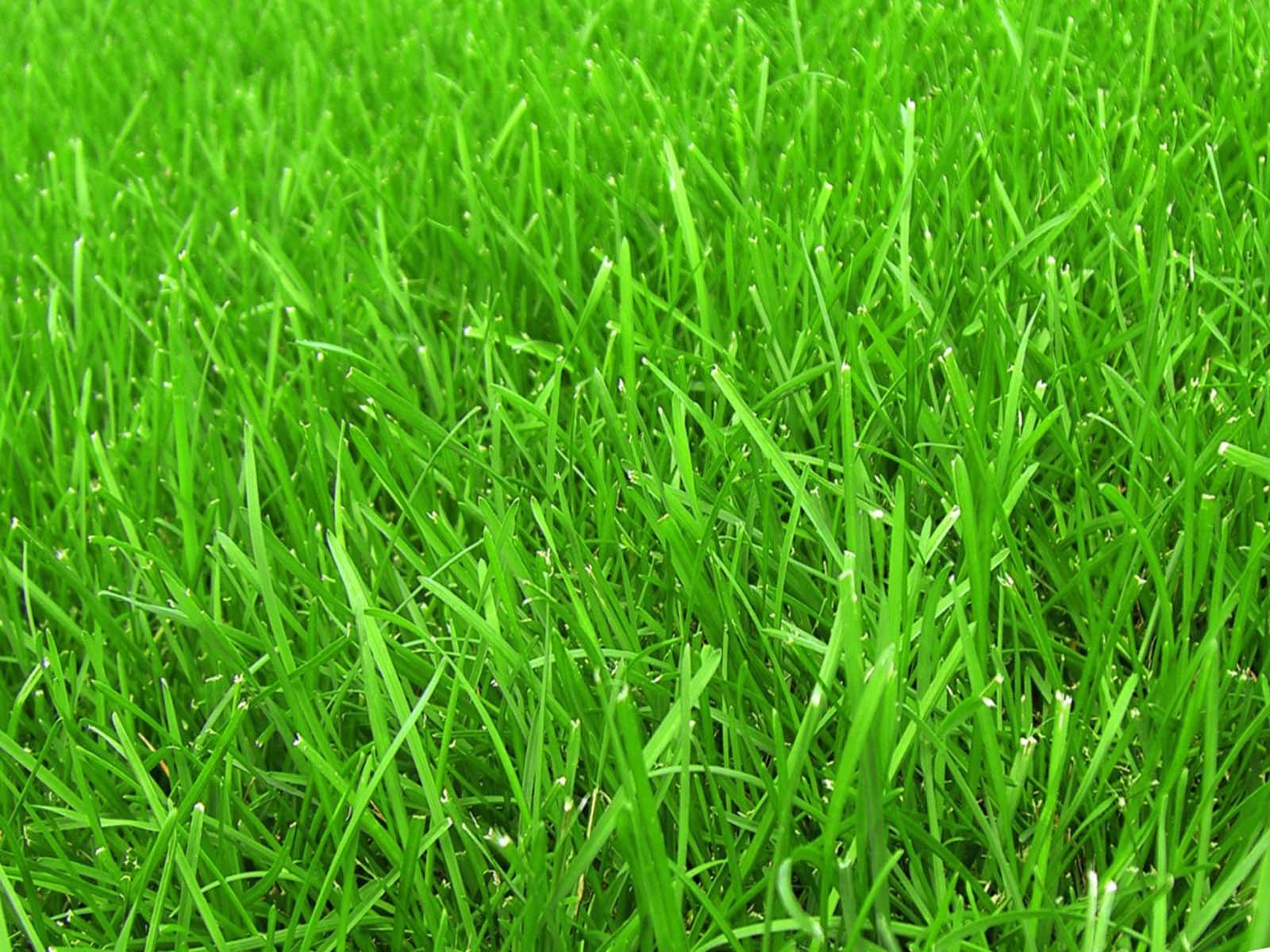 Красивый газон на загородном участке