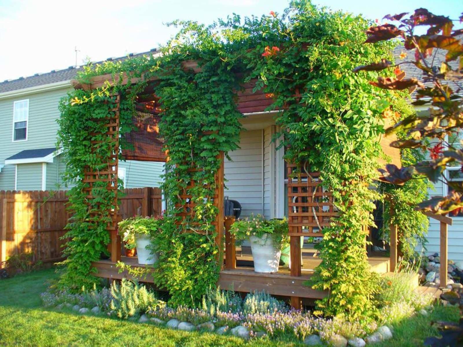 Вертикальное озеленение дачного участка при помощи растений