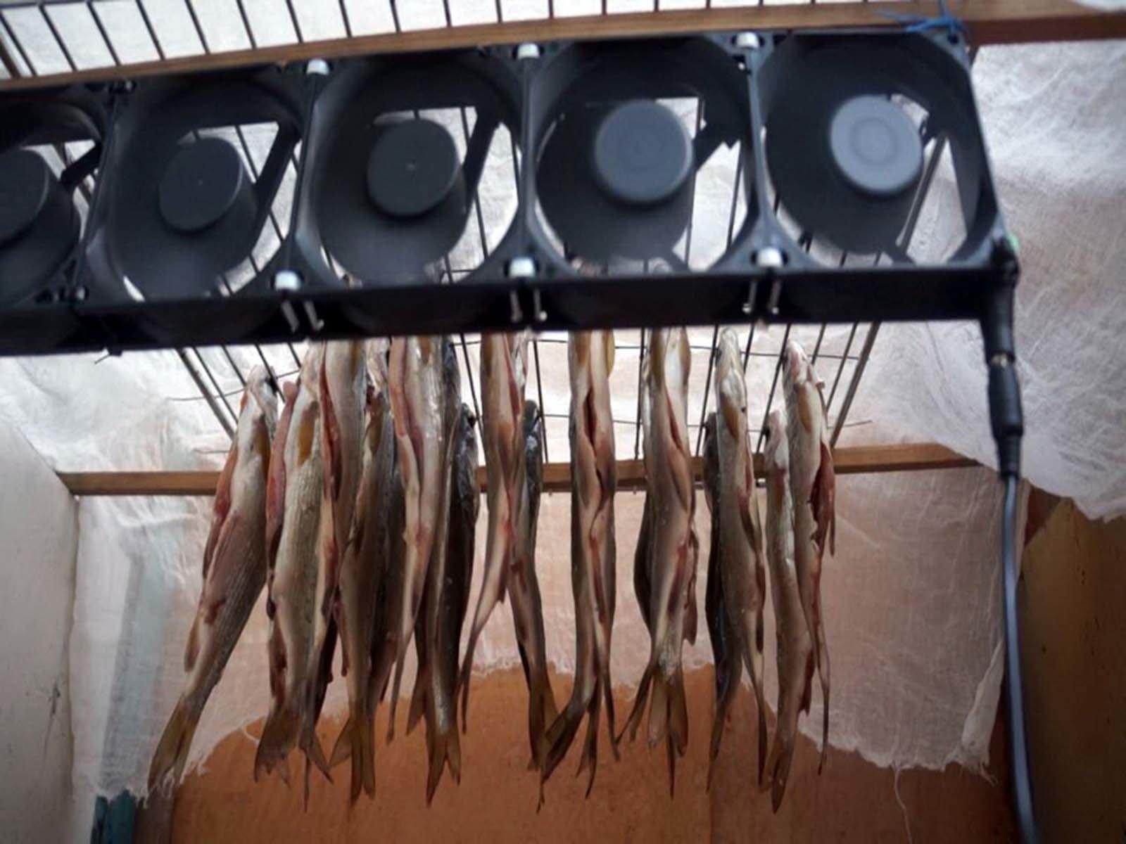 Так выгляди сушилка для рыбы и мяса с вентилятором