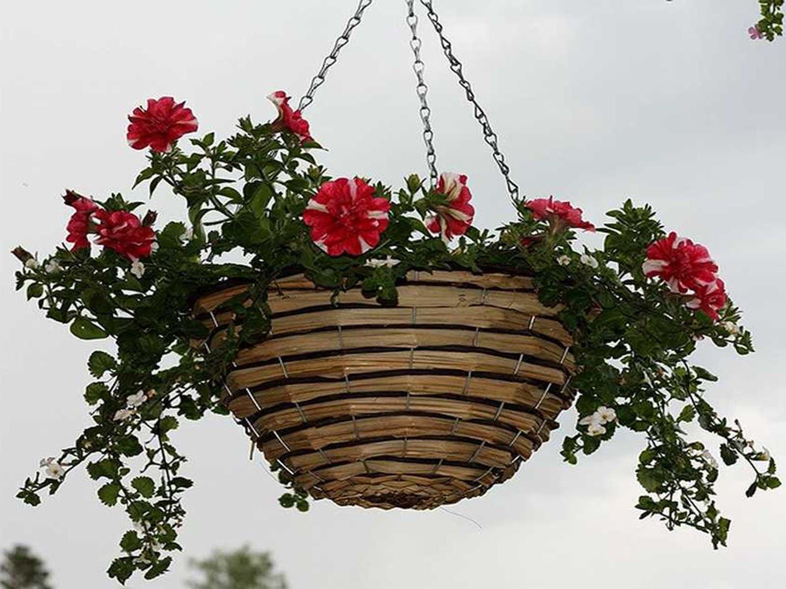 Цветы для деревянной веранды