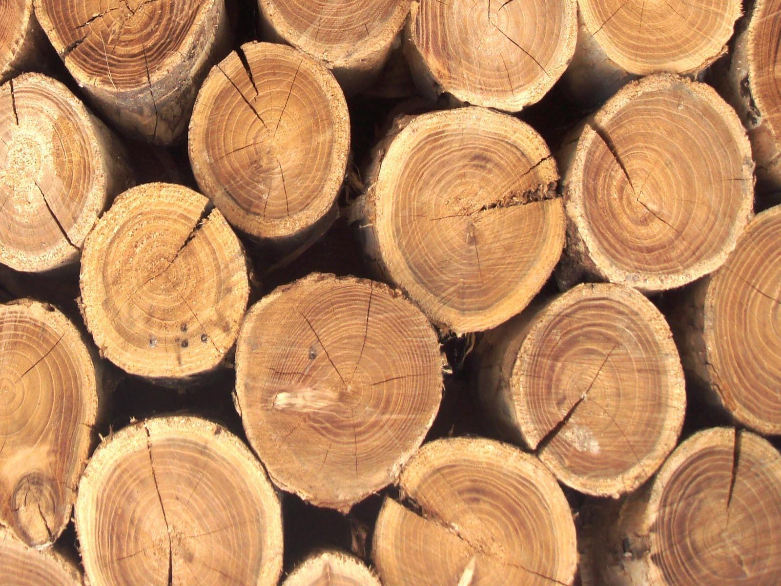 Древесина разных пород имеет разный кпд горения
