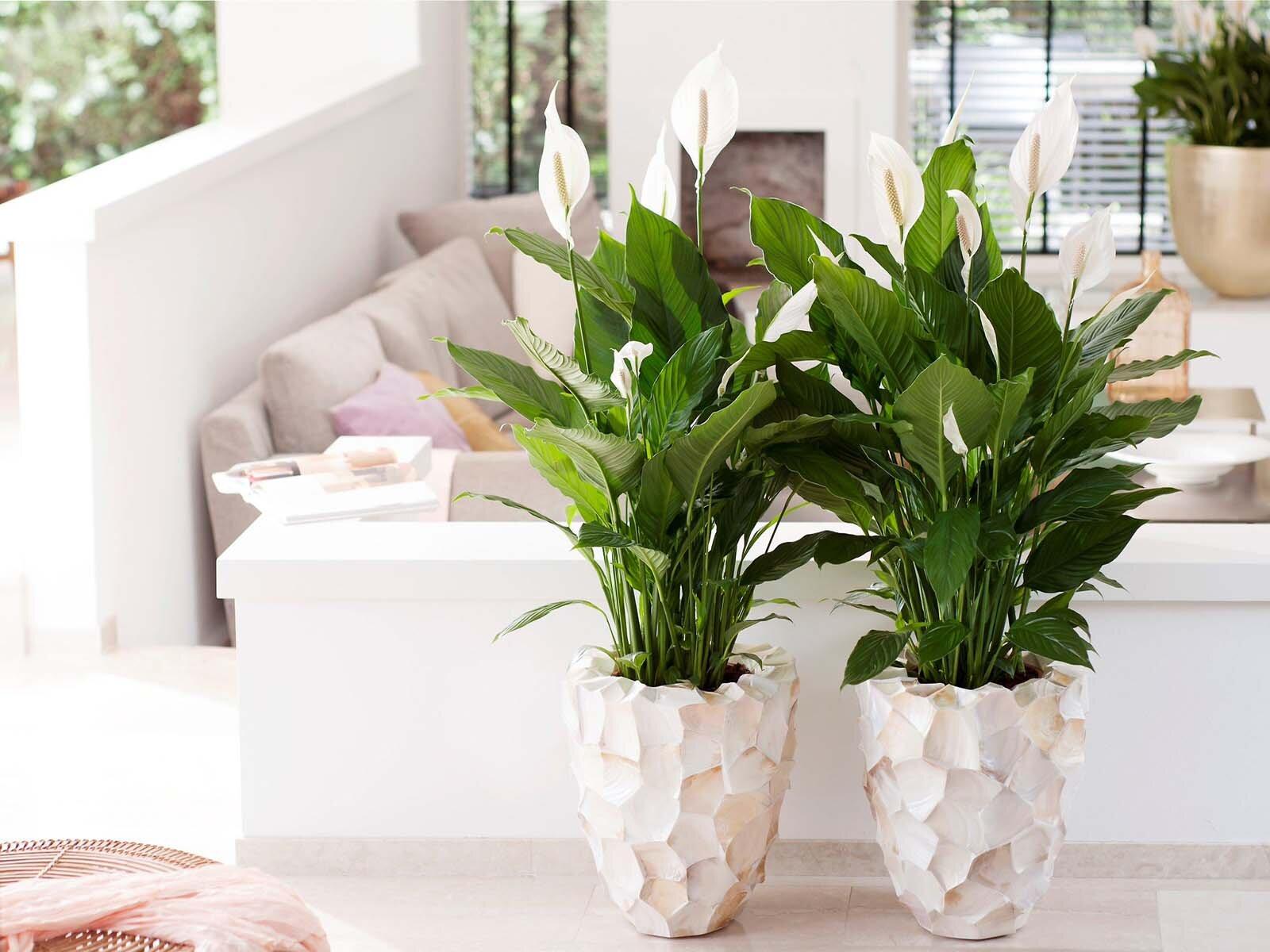 Лучшие растения для спальной комнаты