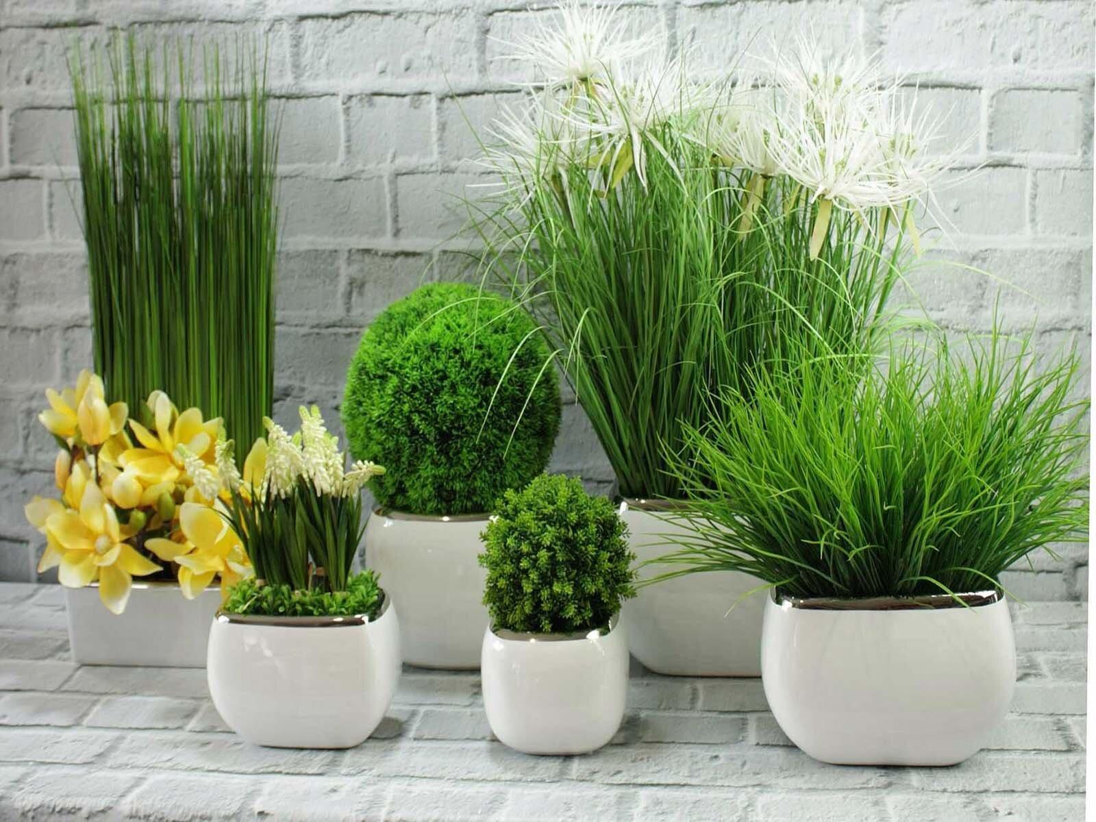 Выбор растений для стиля хай-тэк
